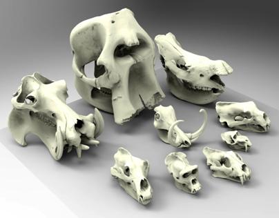 3D Scanning - Animal Skulls