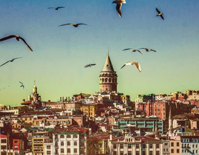 Gulls&istanbul