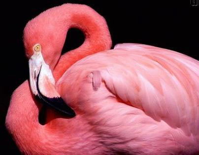 Flamingo, Table/Chair City/Life