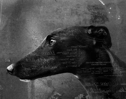 Photo methods IB: Greyhounds.