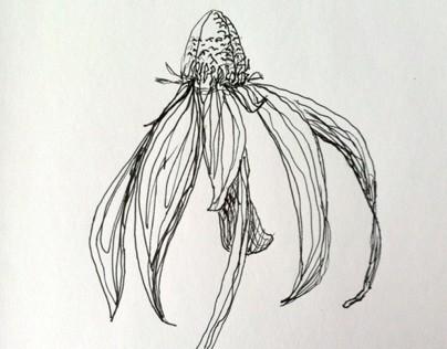 Flowers - February 2013