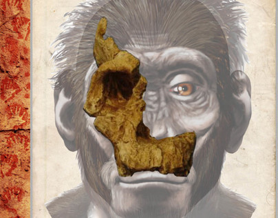 Australopithecus africanus - STS-17 (Book Project)