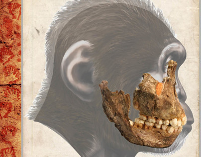 Australopithecus africanus - STS 52 (Book Project)