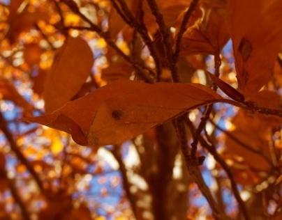Autumn at it's best