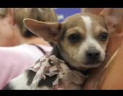 Junior Humane Society Commercial