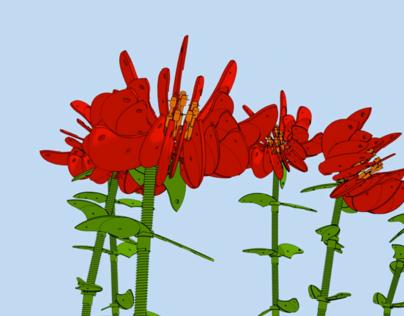 Hummingbird Animation