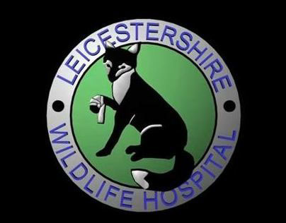Leicestershire Wildlife Hospital Documentary