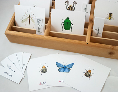 Memory & Alphabet of the Bugs