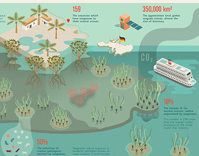 Global Seagrass Watch / environmental project
