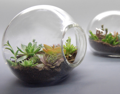 Terrariums 100% Recycled Blown-Glass