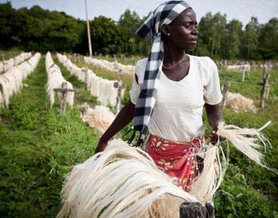 The Sisal Trade Kenya