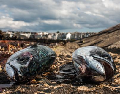 Photography - Gone Fishin'