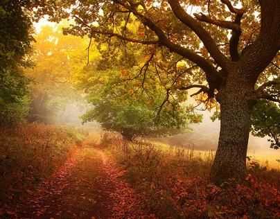 White Carpathians in mist