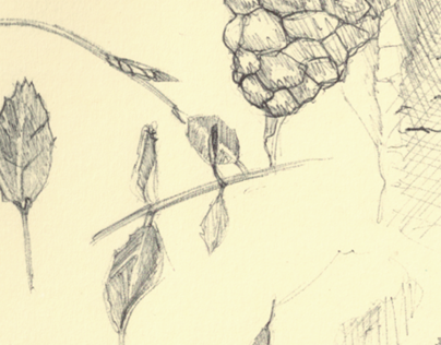 Drawing / Illustration