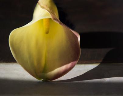 Bomzer Fine Art Photography
