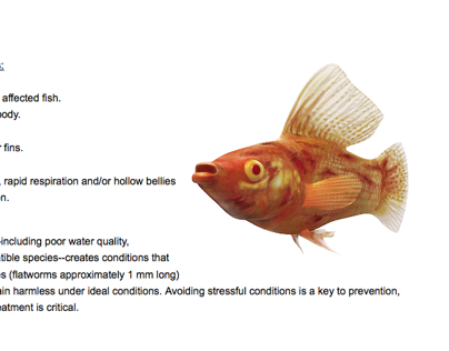 Tetra Fish Illnesses