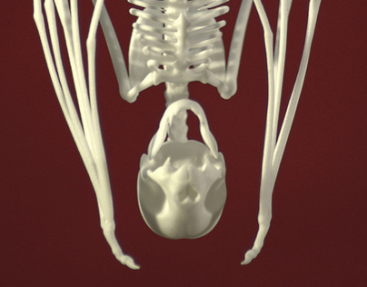 Vampire Bat Skeleton