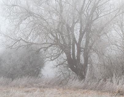 A Foggy, Frosty Walk