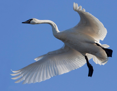 Avian Universe