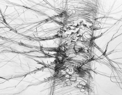 Field Sketches - Maine 2013