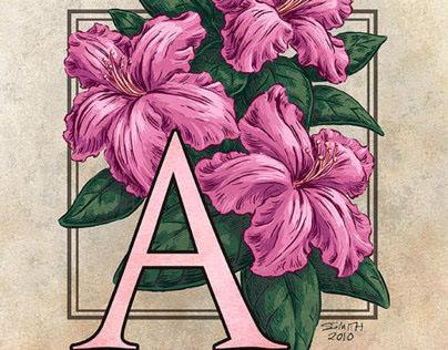An Alphabet of Flowers