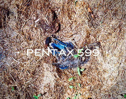 Pentax 599 | Photography