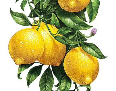 """Иллюстрации для лимонадов ТМ """"Напитки из Черноголовки"""""""