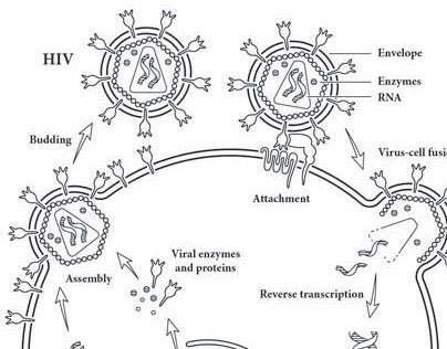 HIV Book Illustrations