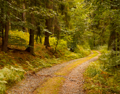 Dreamland of Autumn