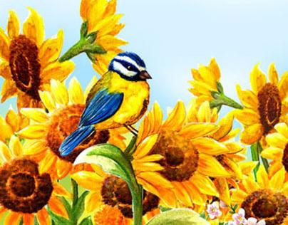 Little Blue Tit & Sunflowers