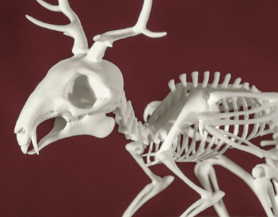 Wolpertinger Skeleton
