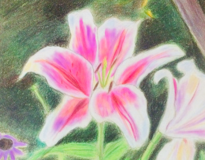 Tiger lily flower made in color pencil