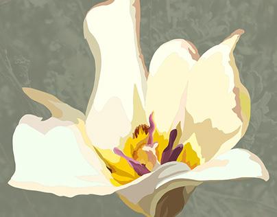 Wildflowers of Sierra Nevada: The Smoky Mariposa