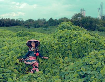The journey of flower - Hành Trình của Hoa Ban