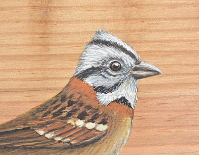 Aves colombianas pintadas sobre madera