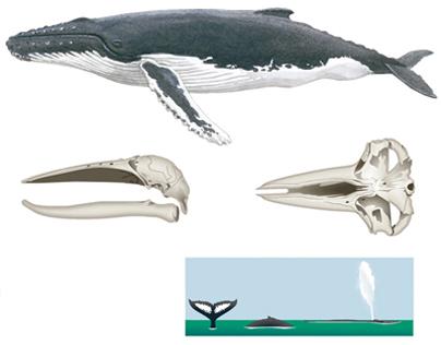 Marine Mammals from Atlantic Sea
