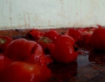 The Tomato Revolution