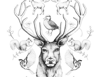 ANIMALS SYMMETRY SYMPHONY