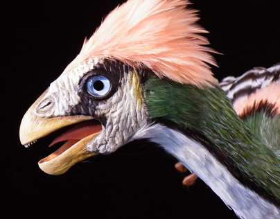 Feathered Dinosaurs for Korean Museum