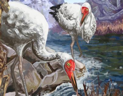 Cranes: Storybook Illustration