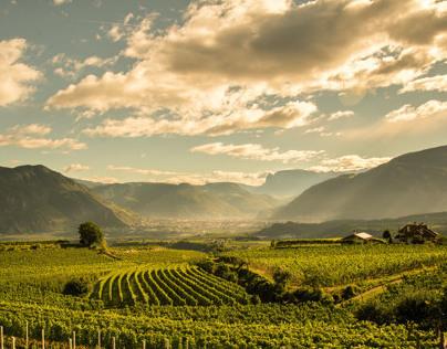 Grape & Vineyards