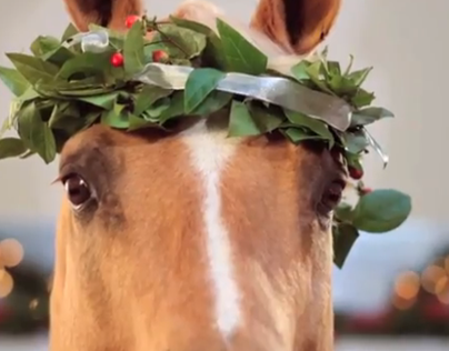 """NC Lottery Holiday """"Gift Horse"""""""