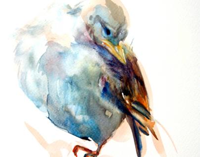 Watercolor Sketches-Creatures