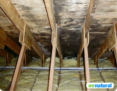 Mould Removal in Vancouver