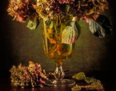 Hydrangeas - Ortensie