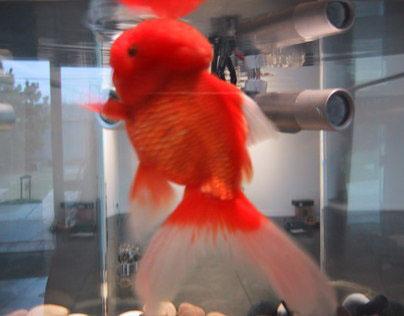 fishbowl (2005)