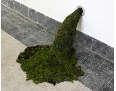 Moss flooding