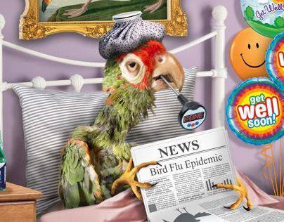 Bird Flu Epidemic