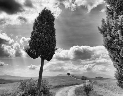 Between Cypresses
