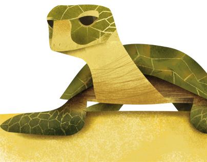 Run Turtles Run   children's book illustration